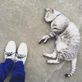我が家の猫_small.jpg