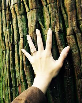 杉の木_small.jpg